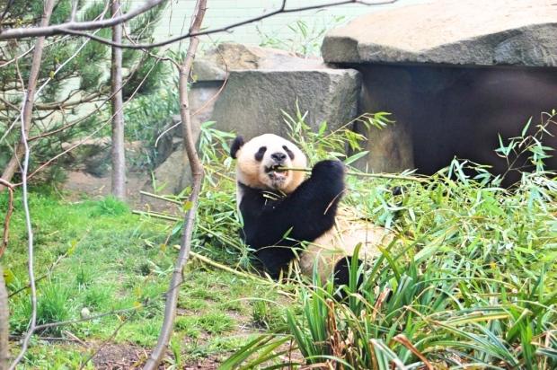 Panda Edited.jpg